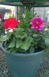 Flower wonder Planter