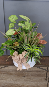 Flowering and Green  Dish Garden