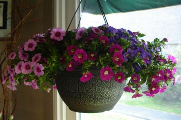 Flowering Annual  Outdoor Hanging Basket