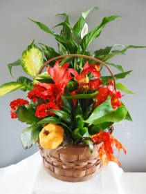 Flowering Fall Basket Flowering and Green Plants