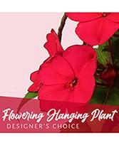 Flowering Hanging Plant Designer's Choice