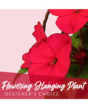 Flowering Hanging Plant Designer's Choice in Osceola, WI | WILDWOOD FLOWERS & ALL THINGS GREEN & GROWING