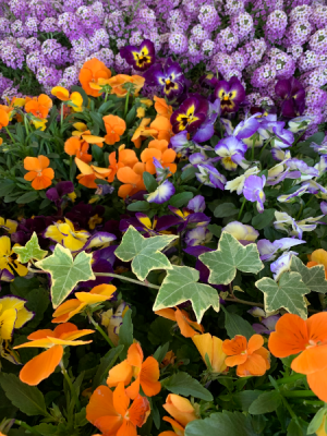 Flowering Outdoor Plants & Baskets  in Northport, NY | Hengstenberg's Florist
