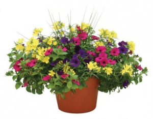 Flowering Patio Pots Outdoor Planter in Chatham, NJ | SUNNYWOODS FLORIST