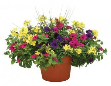 Flowering Patio Pots Outdoor Planter