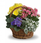 Flowering Plant Basket Plants