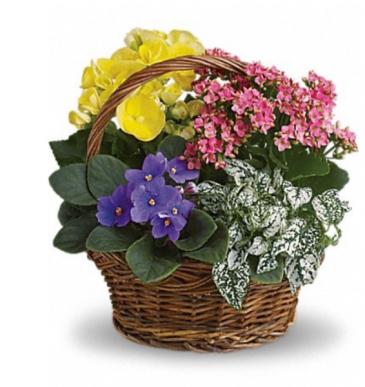 Flowering Plant Basket Plants