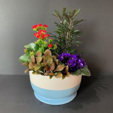 Flowering Tropical Garden