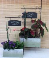 Flowers & Garden Planter