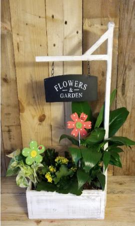 Flowers & Garden plants