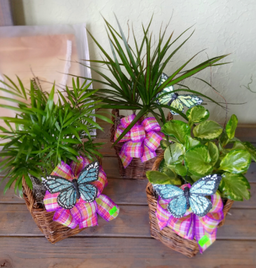 Flutter Tropical Plant