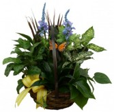 Foliage Basket House Plants
