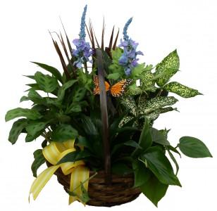 Foliage Basket House Plants