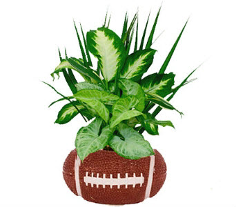 Football Planter Indoor Plants