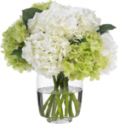 For the Love of Hydrangeas Vase