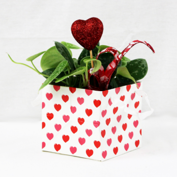For the Love of Plants Valentine's Day