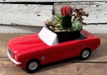 Ford Mustang Succulent Garden