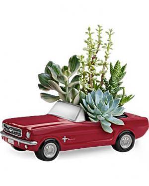 Ford Mustang Succulent Garden   in Sunrise, FL | FLORIST24HRS.COM