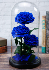 Forever Blue roses dome Roses that last for years