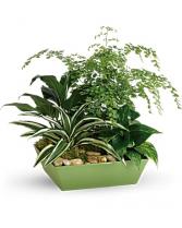 Forever Green Plant Garden