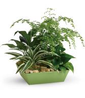 Forever Green Plant Garden HPL031A