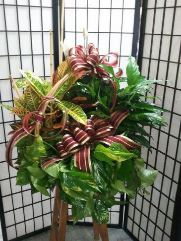 Fourplex Garden Basket Plant