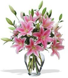 Fragrant Baby Girl Lilies