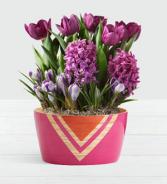Fragrant Purple Bulb Garden .WGP1766-N