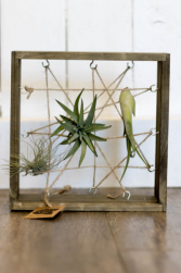 Framed Air Plants
