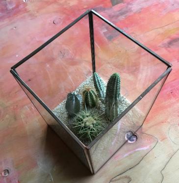 Framed Display Terrarium
