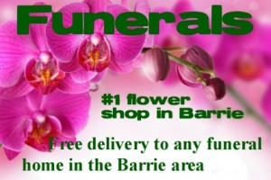 FREE DELIVERY to any funeral home in Barrie No service fees in Barrie, ON | FLOWERS AND PINEWORLD