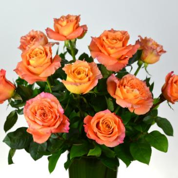 Free Spirit One Dozen Free Spirit Roses
