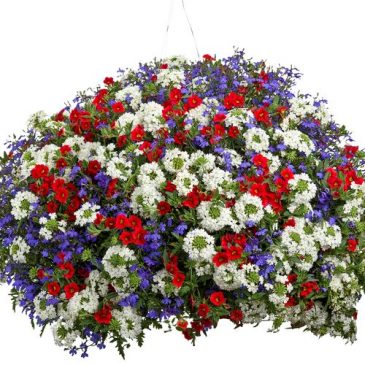 "Independence Day -- 12"" Hanging Basket"