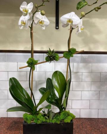 Freedom  Plant