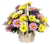 Fresh as a Daisies  Basket Arrangement