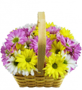 Fresh As A Daisy Basket Arrangement