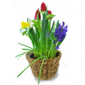 Fresh Bulb Garden Potted Plants