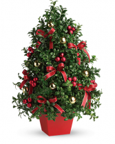 FRESH CUT BOXWOOD TREE CHRISTMAS-WINTER