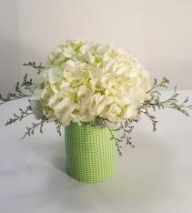 Fresh Cut Hydrangea Green Checked Ceramic