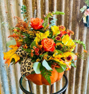 Fresh fall pumpkin Fall in Ingram, TX   Showers Of Flowers