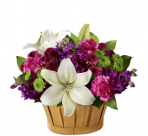 Fresh Focus Arrangement - 668 Basket Arrangement
