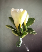 Fresh Freesia Boutonniere