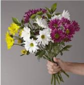 Fresh hand tied daisy bouquet  Hand tied daisy's