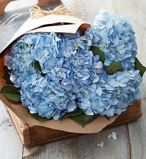 Fresh Market Hydrangea Bouquet