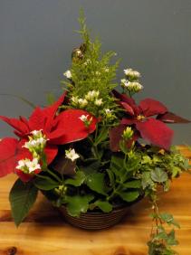 Fresh Mix Potted Christmas Planter