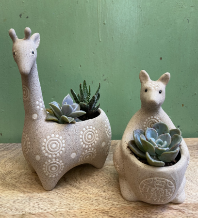 Friendly Animals planter with succulents