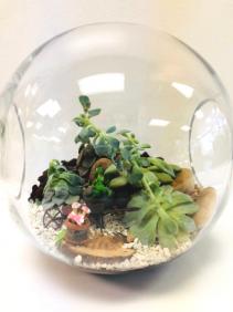 Frog Garden Terrarium Plant