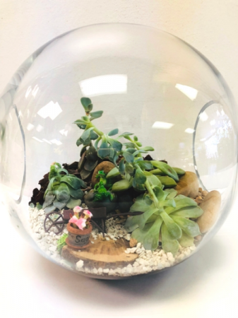 Frog Garden Terrarium Plant In Webster Tx La Mariposa Flowers