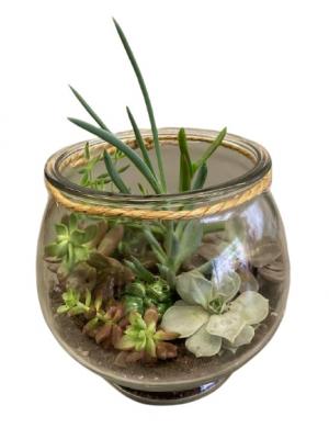 Frog Terrarium planter  in Silverton, OR   Julie's Flower Boutique