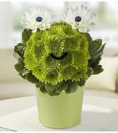 Froggie Flower Pail™ Arrangement